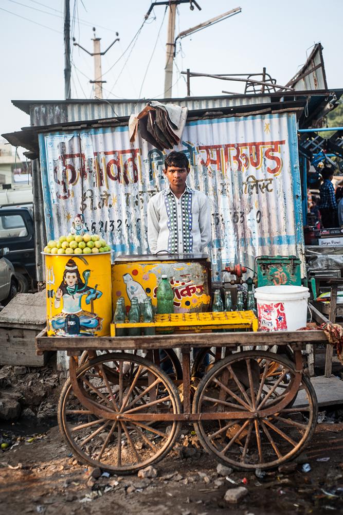 Bullock_India-2.jpg