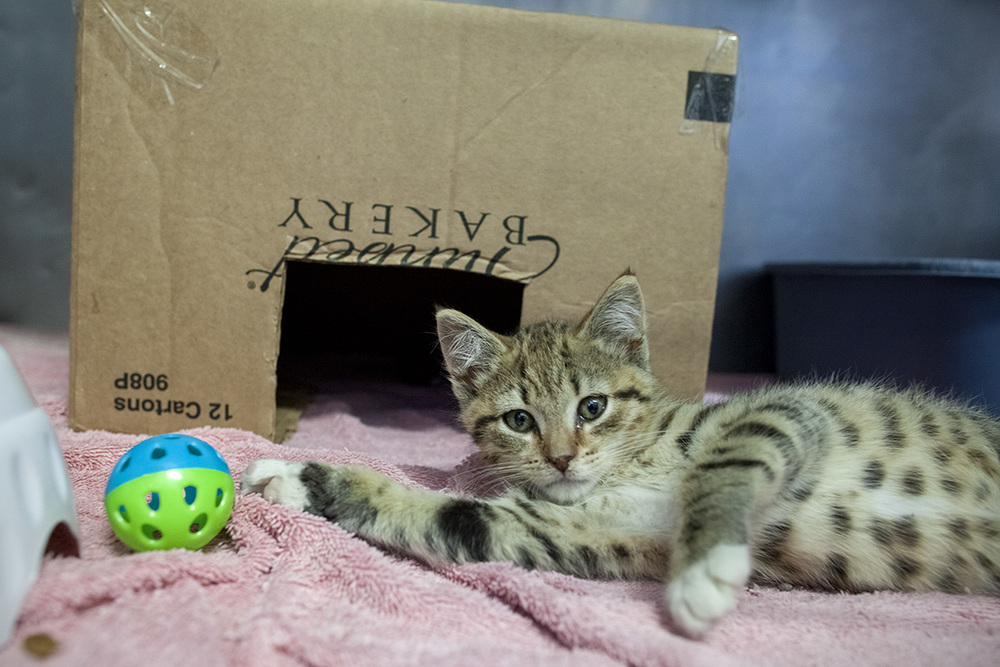 07_10_14_cat_box.jpg