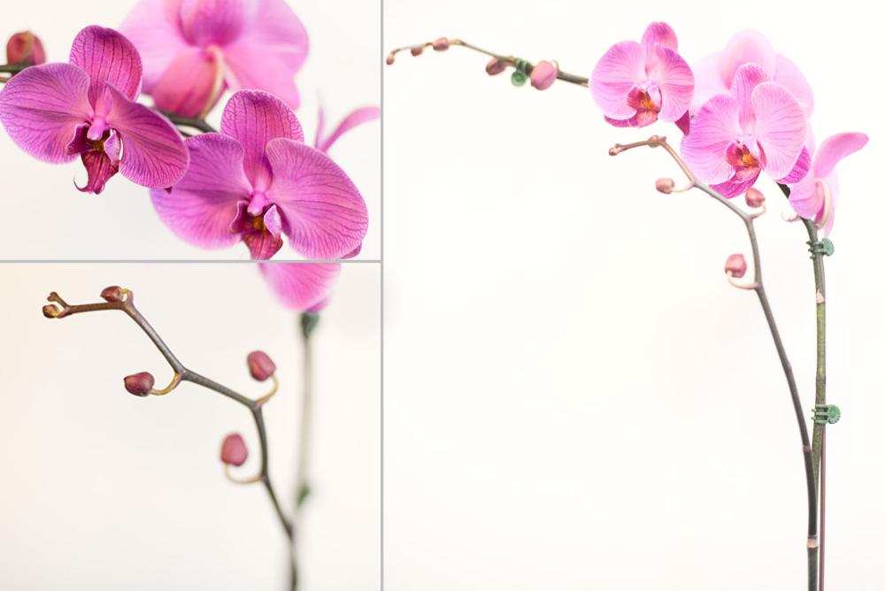 ORCHID-2 copy.jpg