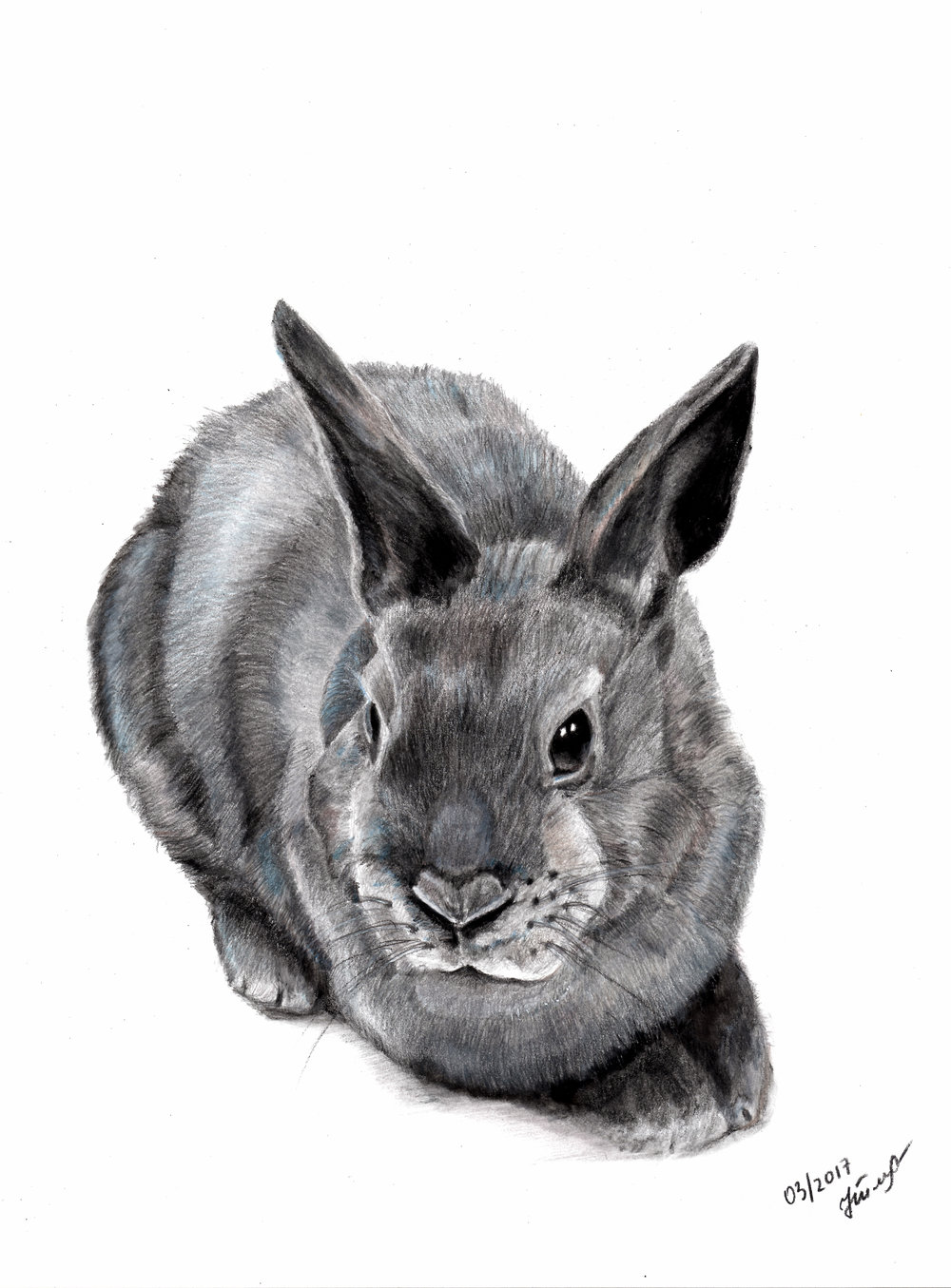 BUNNY  • 12 X 9 • COLORED PENCILS ON PAPER •  $600