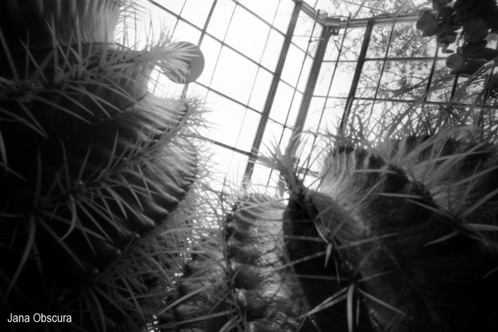 cactus-up