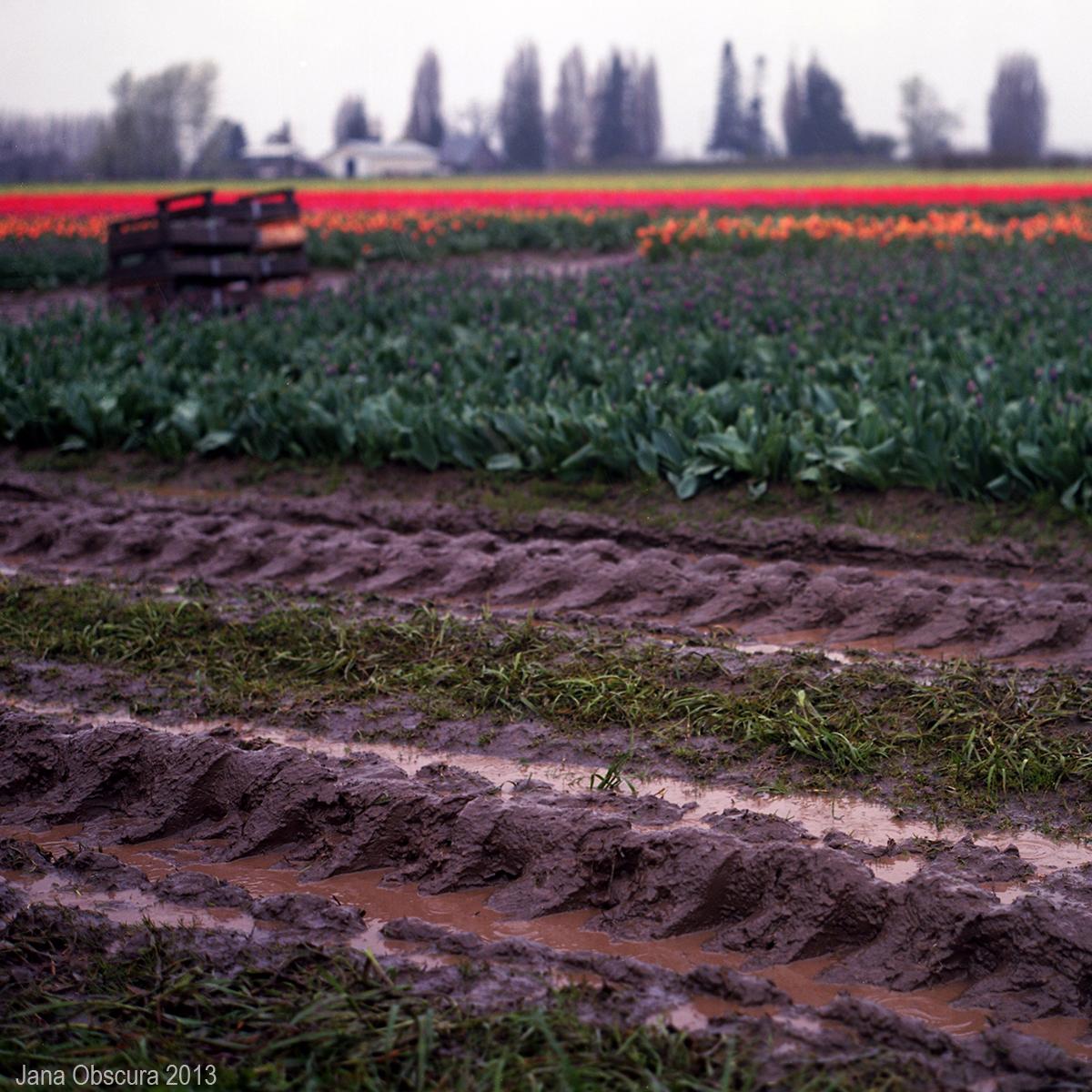 muddy fields