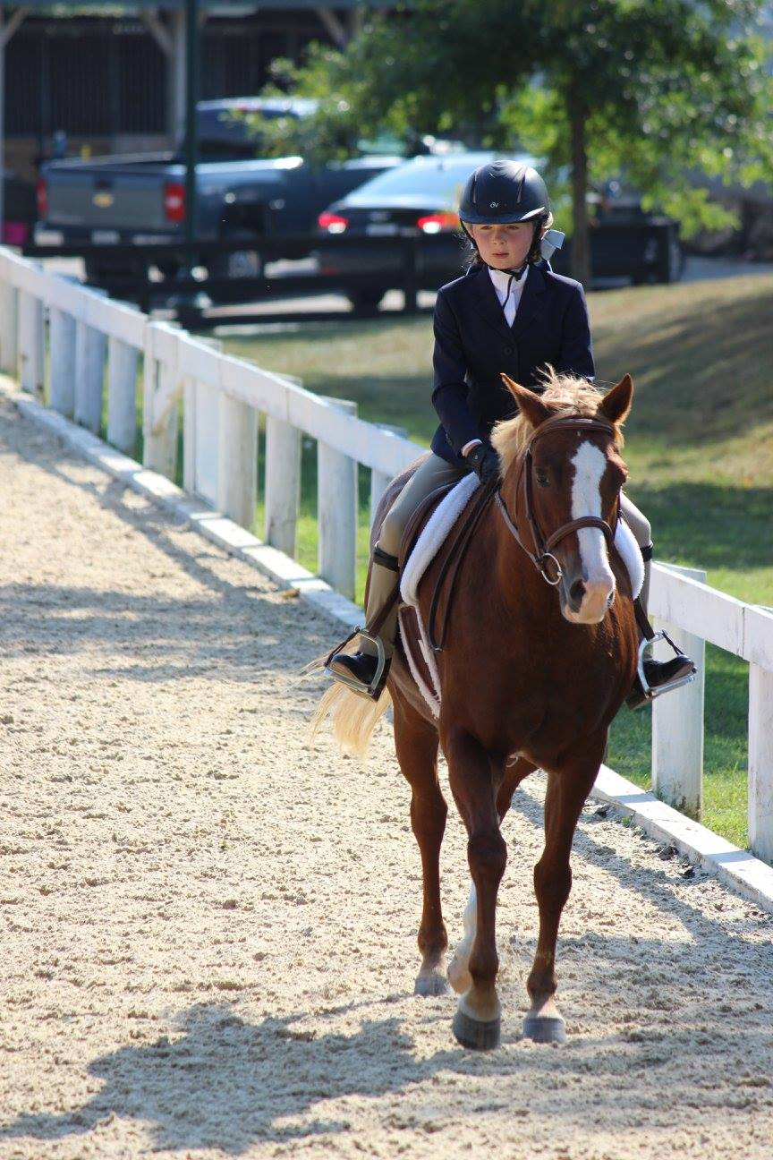 Horse show focus!