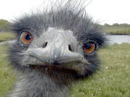 That's my Emu. He was really excited to help me out with his wonderful natural oils :) Can you tell?