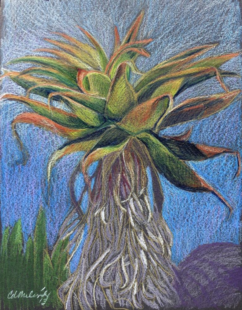 Sábila (Aloe Plant)
