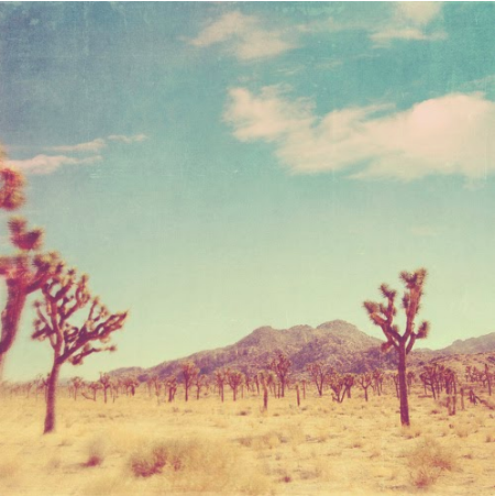 These 10 photos of the desert.