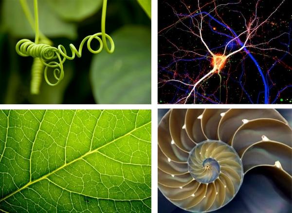 tendril, dendrite, seashell, leaf