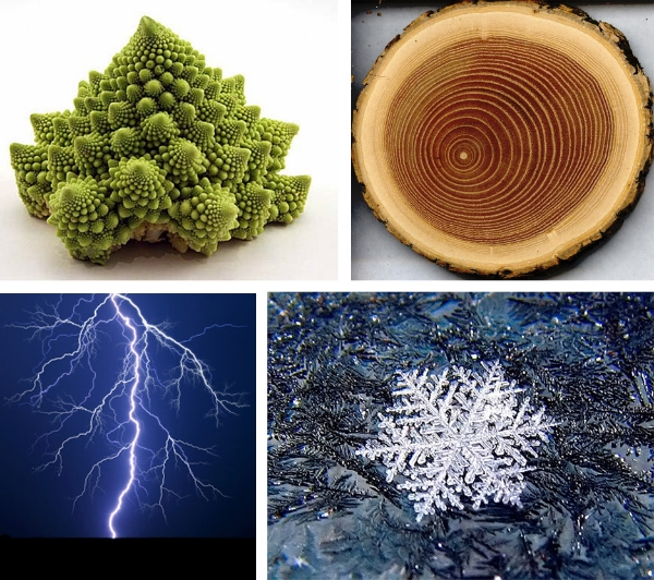 romanesco broccoli, tree trunk cross-section, snowflake, lightning bolt