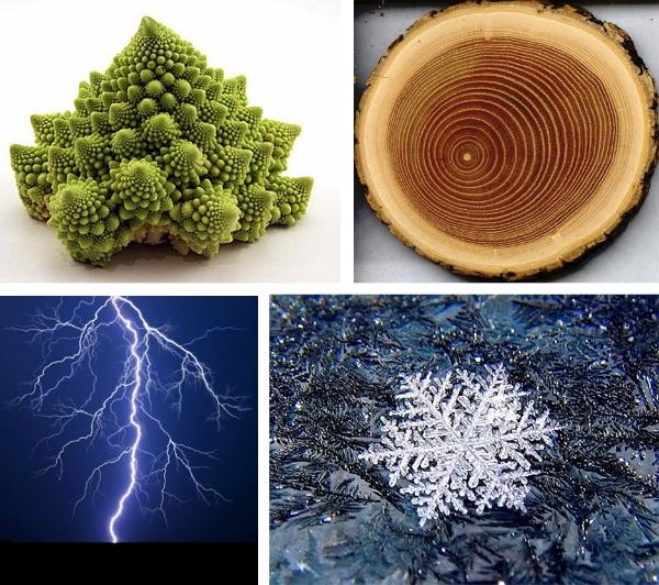 romanesco broccoli, tree trunk cross-section, snowflake, lightning bolt