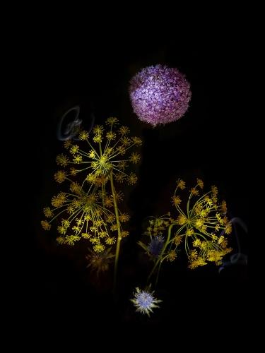 flower fireworks (flowerworks) by sarah illenberger
