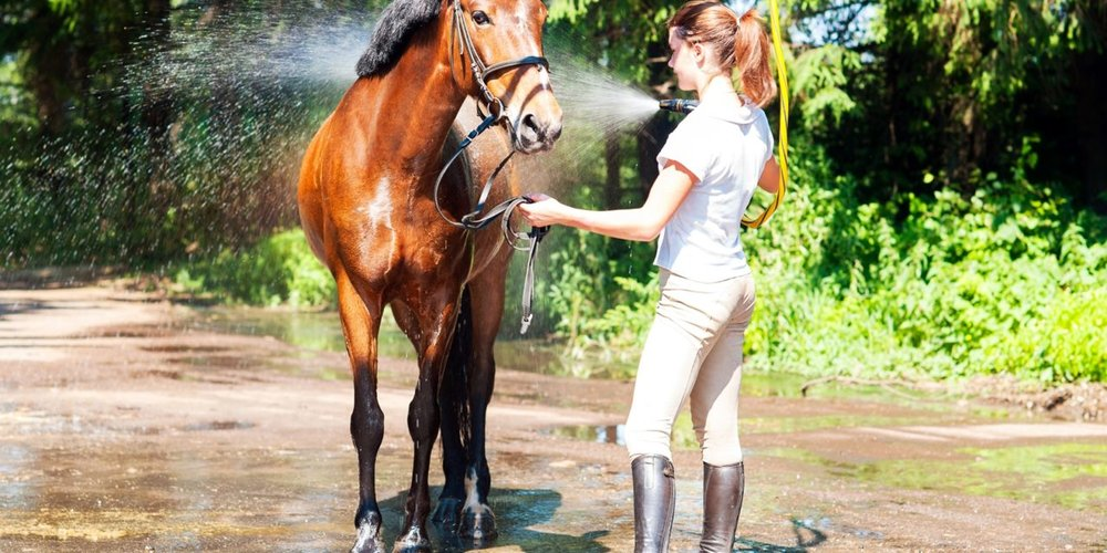 girl-bathing-horse-in-bridle-1280x640.jpg