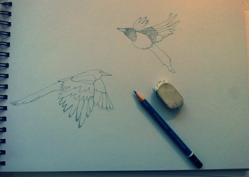 drawing magpies / children's book illustrations