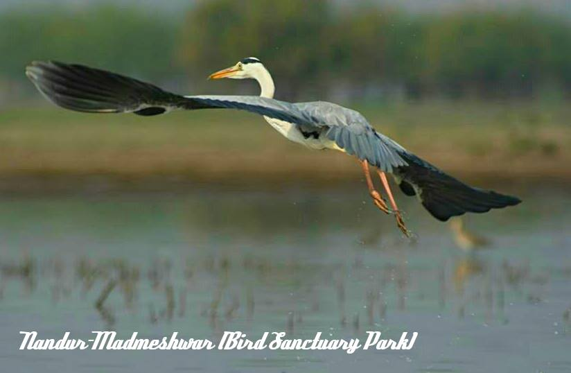 Nandus madhmeshwar Bird sanctuary park | Nashik wine tour