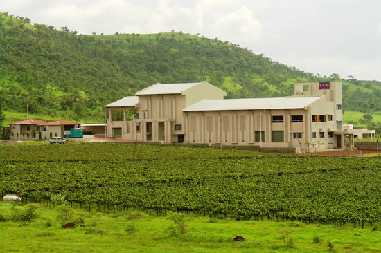 Nashik wine tour | york winery nashik