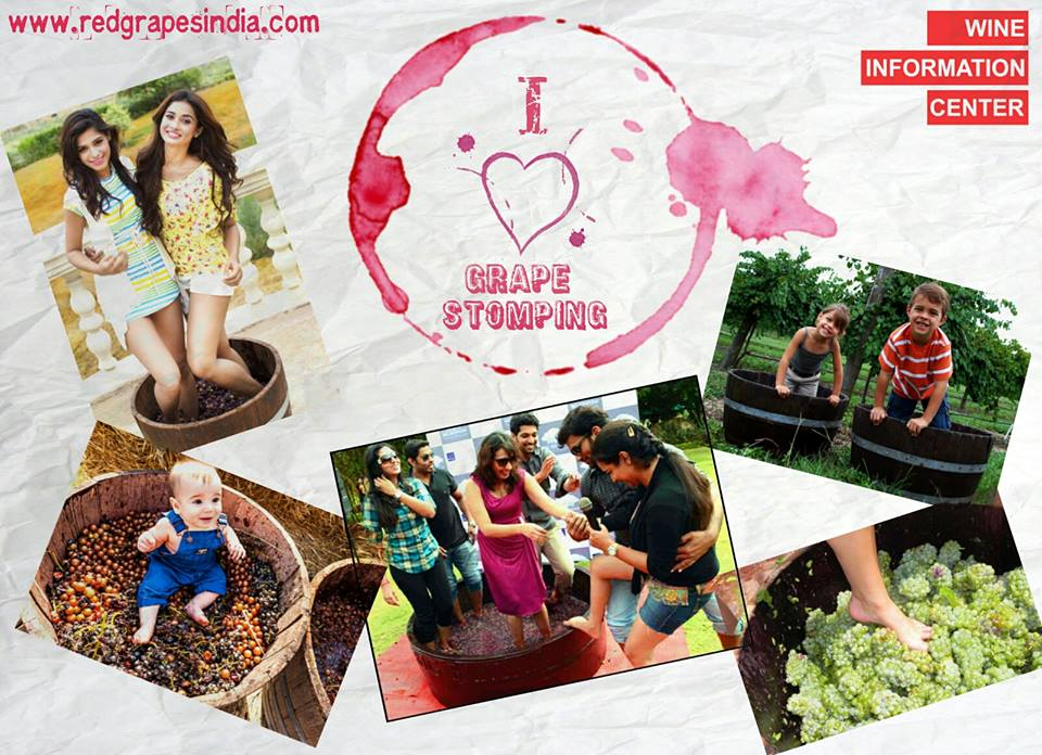 Grape stomping at Wine information center by Red grapes at Wine park, Nashik, Maharashtra, India