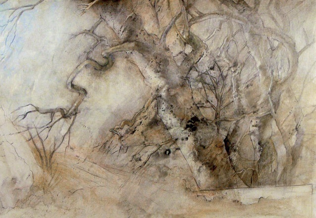 Sycamore Trees  By Jane Morris Pack