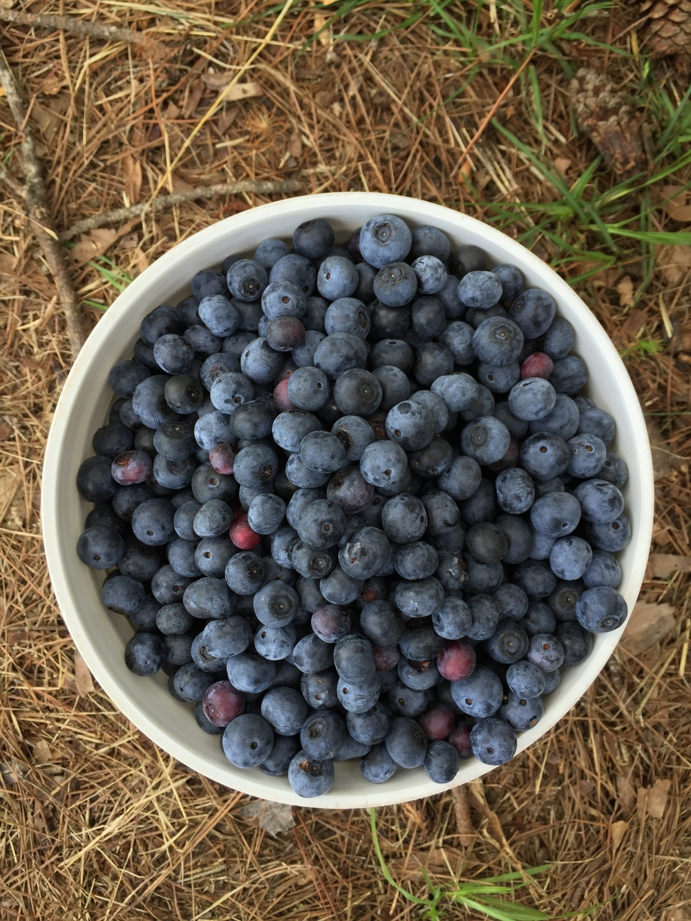 blueberryrecipe
