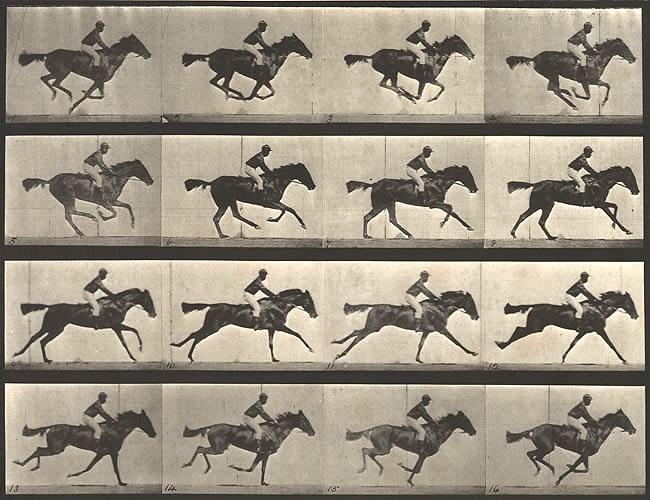 muybridge_horse1-1.jpg