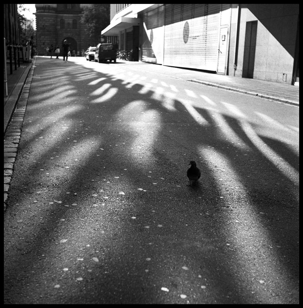 Shadows030 skew.jpg