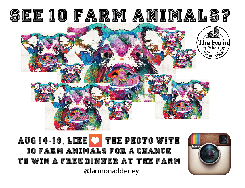 The Farm on Adderley's 10th Anniversary is coming up!! To Celebrate, LIKE our photos on INSTAGRAM during our anniversary week (August 14-19th). LIKE the lucky photo with 10 farm animals for a chance to win dinner ($50 gift certificate) on us!