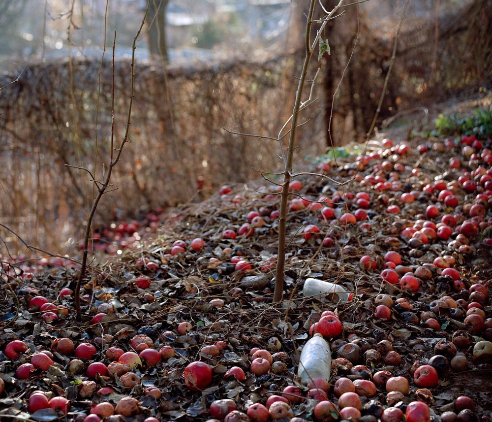 rotten apples.jpg