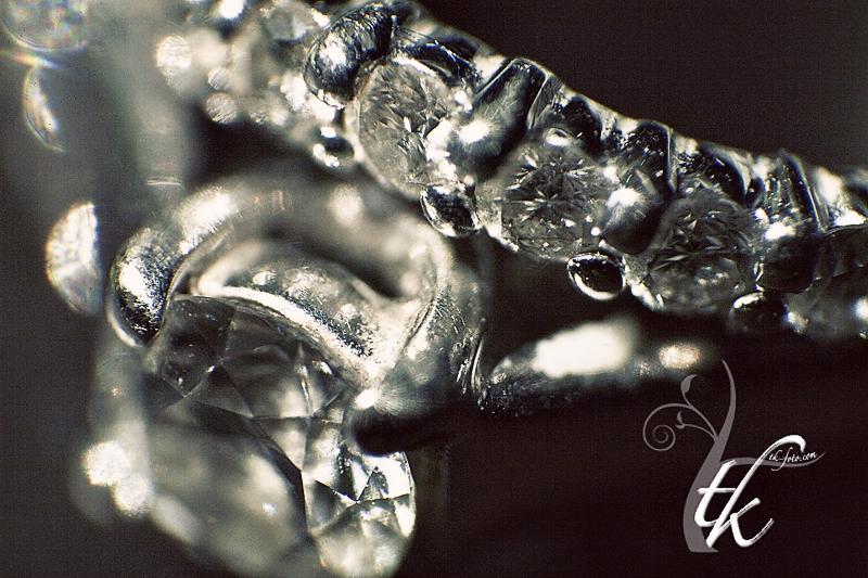 Non-traditional Macro Photography - Tamara Kenyon Photography