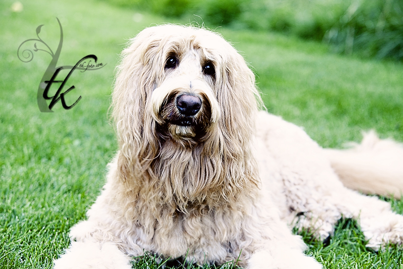 Doggy - Boise Idaho Animal Photographer