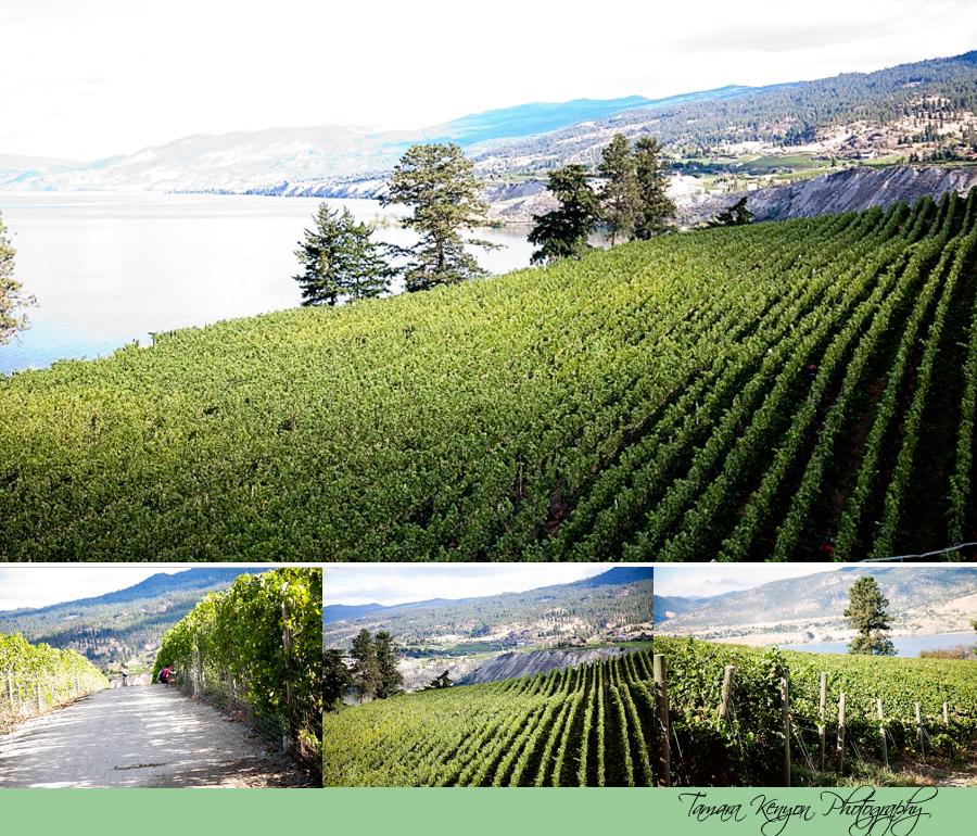 Penticton British Columbia - Tamara Kenyon Photography