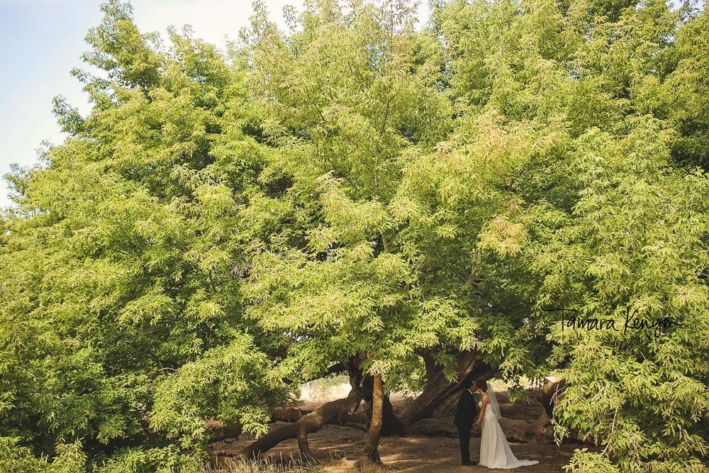 giant tree wedding photos boise idaho