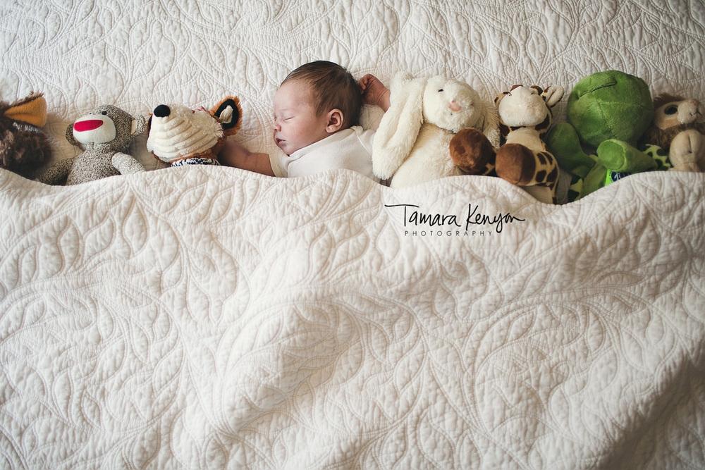newborn photography boise