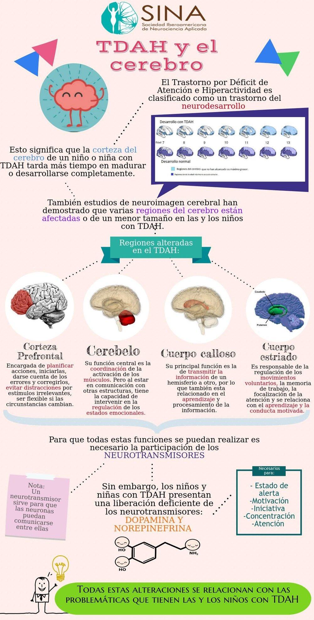 TDAH + cerebro.jpeg