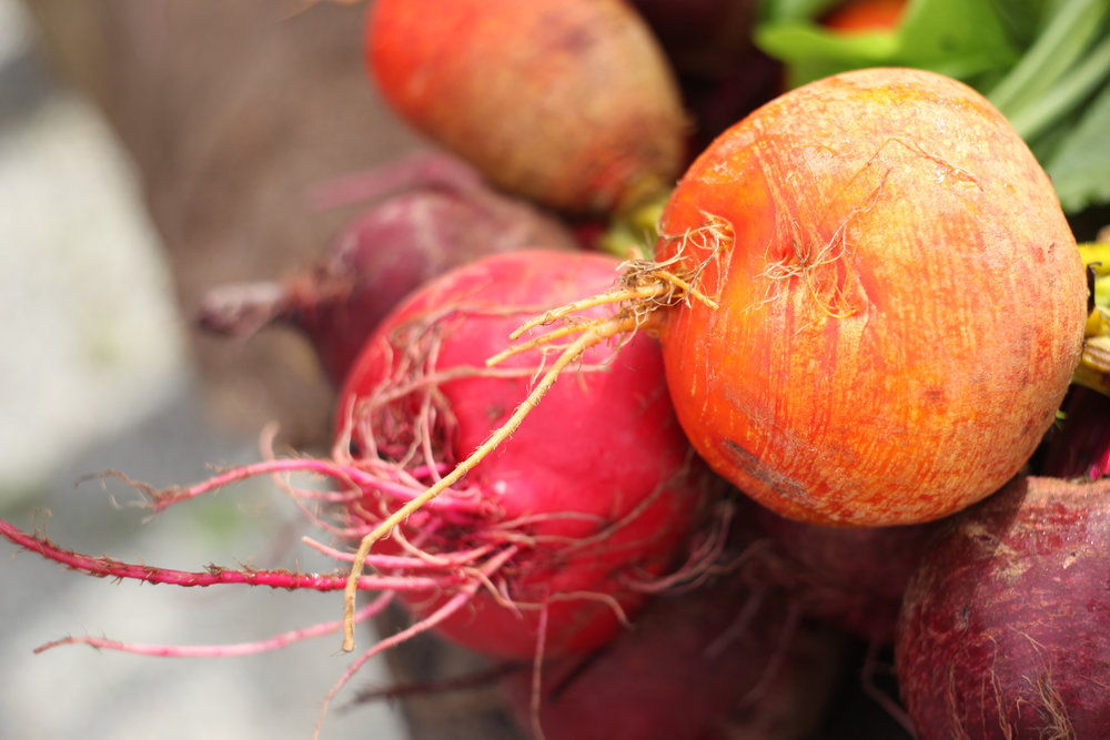 Golden and candy beets