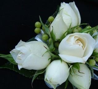 ivory spray rose