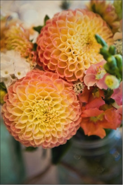 yellow and pink dahlia