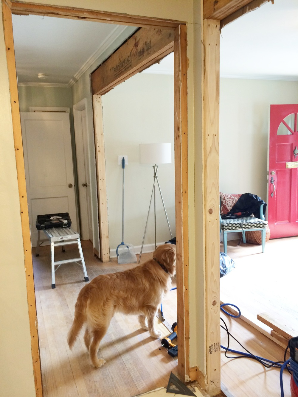 Post wall demolition and pre drywall installation, Murph enjoys the new view!
