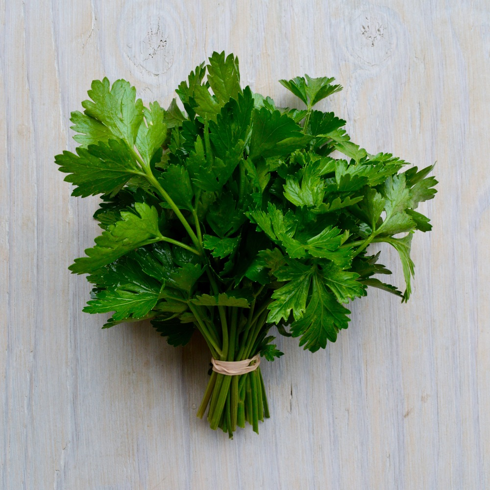 'Italian Giant' Parsley
