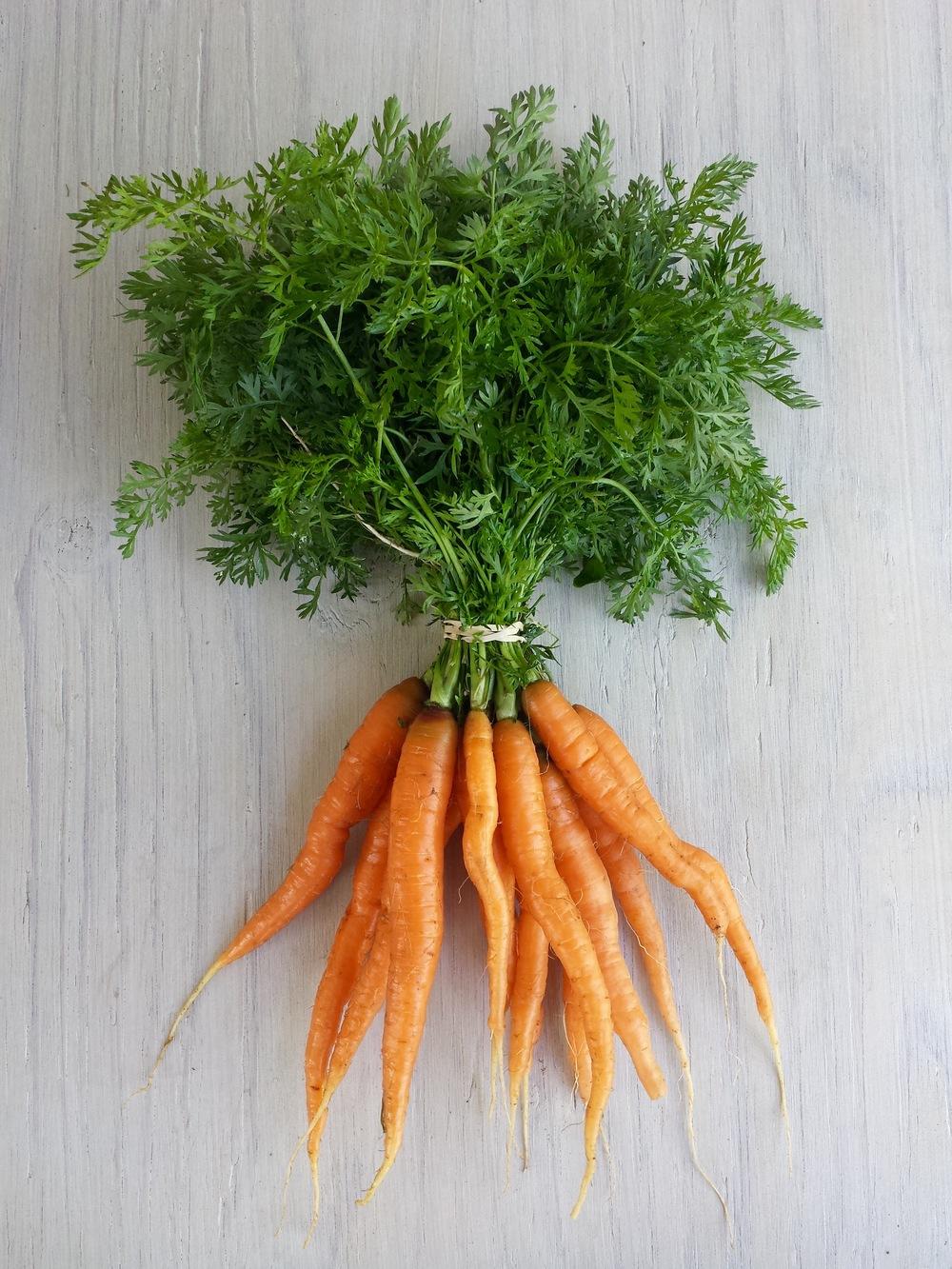 Mokum Carrots