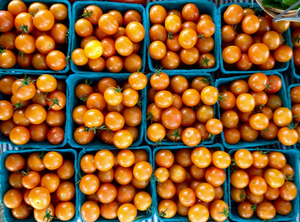 Sun Gold Cherry Tomatoes