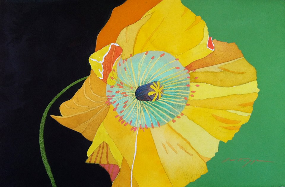 Yellow Poppy on Green and Black