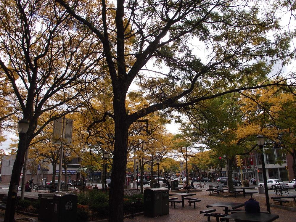 Davis Square.JPG