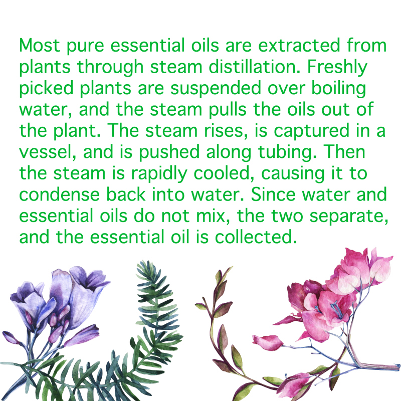 Essential Oils - 100% Natural.