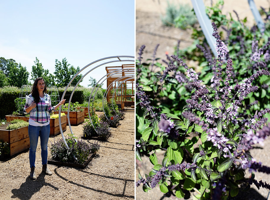 The new sunset magazine test garden and kitchen at for Garden design quiz
