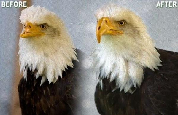 達億3D列印+鸚鵡.jpg