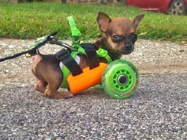 達億3D列印+狗狗.jpg