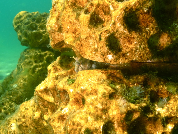 ▲ 之前放置的 MARS 人工珊瑚礁,現已變成不同海洋生態的棲息地