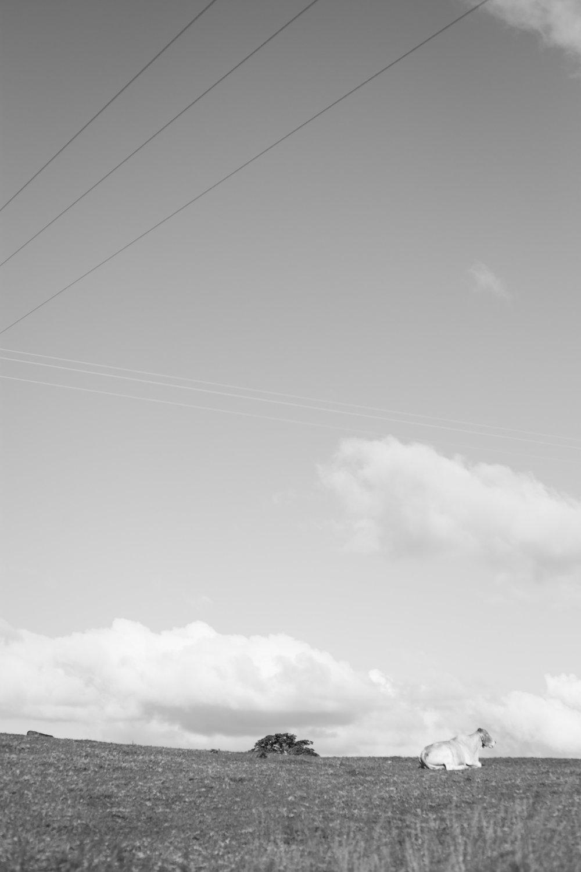 Thomas Oliver - SS-11.jpg