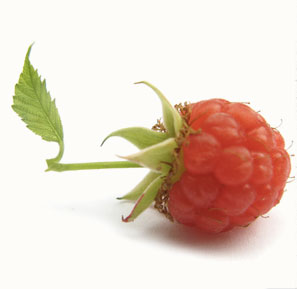 Red raspberry leaf helps to tone the uterus and promote blood flow to reproductive organs.