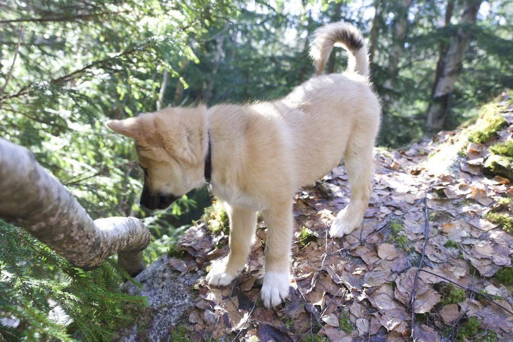 Å klatre på steiner og trær er kjempemorsomt