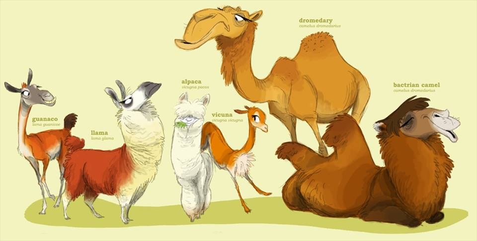 Camelidfamilien