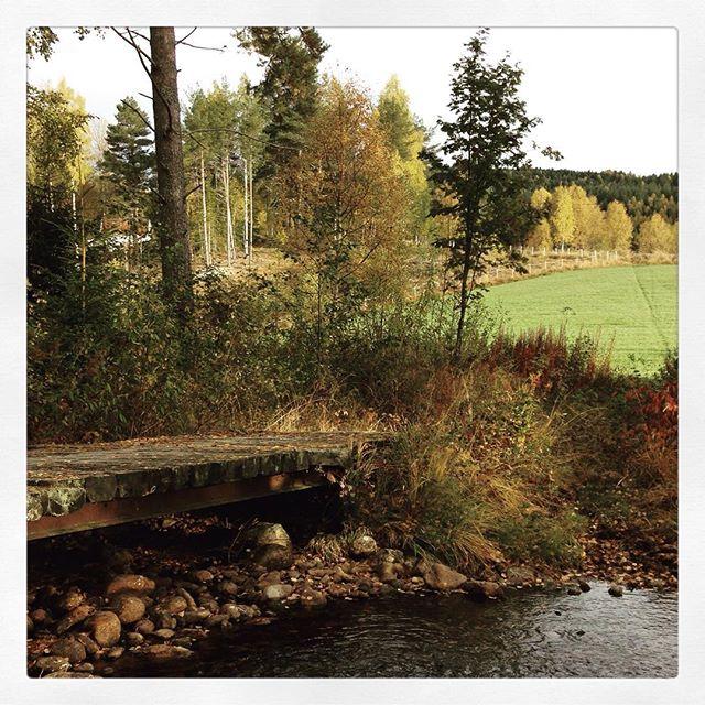 Høst ved bekken #ådalen #nrkbuskerud #autumn